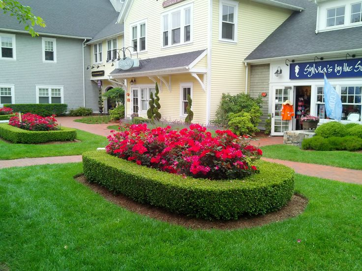 Landscaping With Boxwoods And Roses : Knockout roses with a boxwood hedge garden
