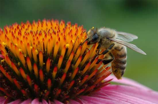 20 Unusual Uses for Honey