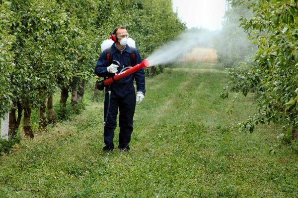 Zeama bordeleză este preferată de mulți grădinari pentru că poate fi preparată relativ ușor în gospodărie și este considerată o substanță (bio) mai puțin toxică. Este un fungicid de con