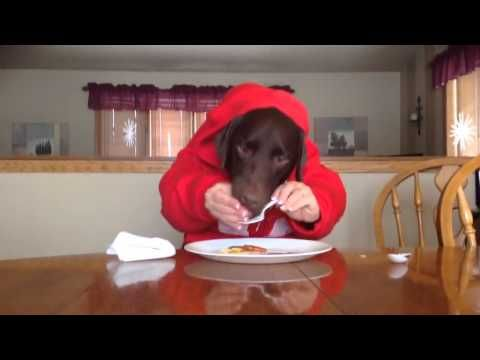 Dog Eating Like Human In Red Hoodie