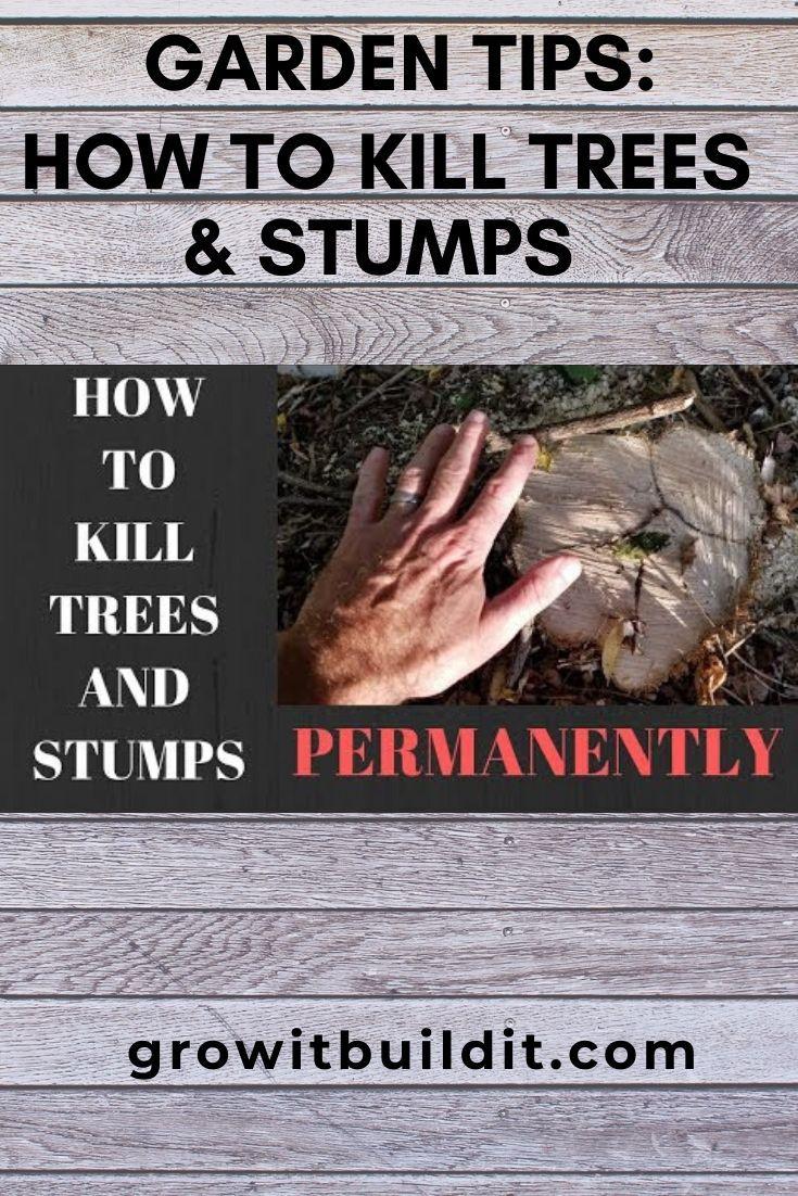 Kill Tree Stumps Permanently Easy Effective In 2020 Kill Tree Stump Tree Stump Gardening Tips