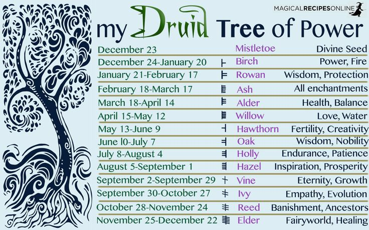 "Druid's Magical Trees of the Year - Celtic Astrology - Magical Recipes Online <script asyncsrc='//pagead2.googlesyndication.com/pagead/js/adsbygoogle.js'></script> <script> (adsbygoogle = window.adsbygoogle || []).push({ google_ad_client: ""ca-pub-0814936246415499"", enable_page_level_ads: true }); </script>"