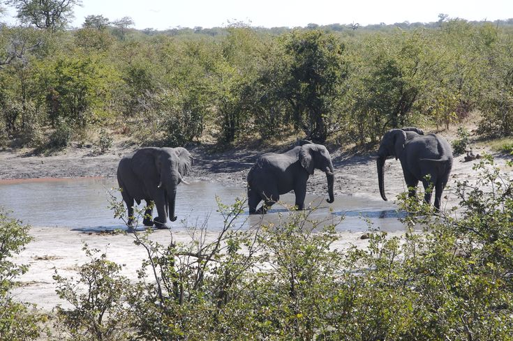 Its always a treat to see elephant enjoying the water hole.