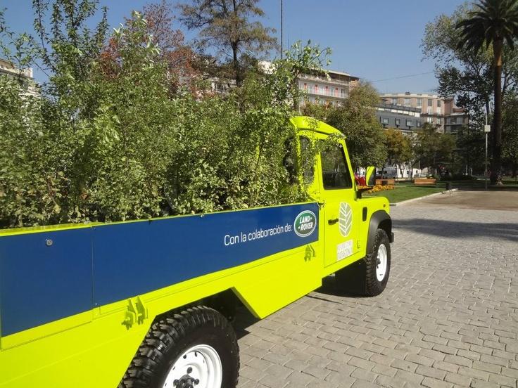 Land Rover se puso con el transporte para los arbolitos