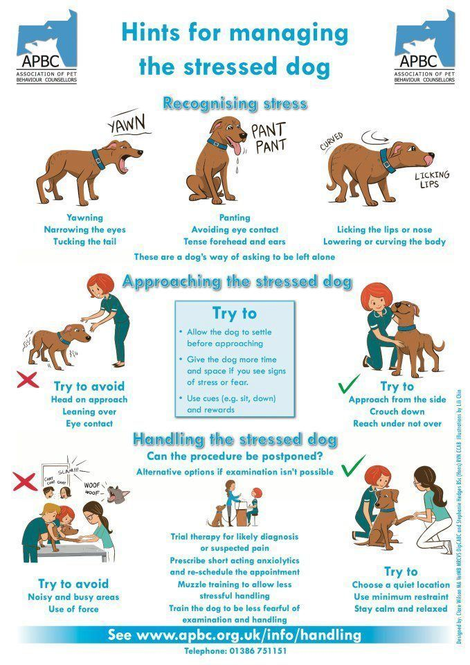 Recognizing The Signs Of A Stressed Dog Dog Training Dogs Dog