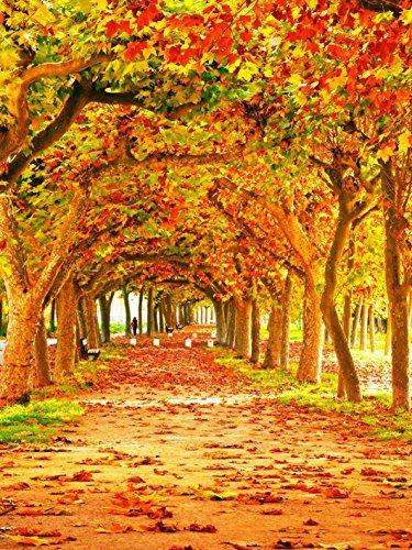 5x7ft Gold Yellow Photography Backdrop Autumn Rustic Red ... https://www.amazon.co.uk/dp/B01LZKB63H/ref=cm_sw_r_pi_dp_x_iPgcybM6YBV8X