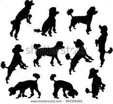 Résultats de recherche d'images pour «silhouette de poodle»