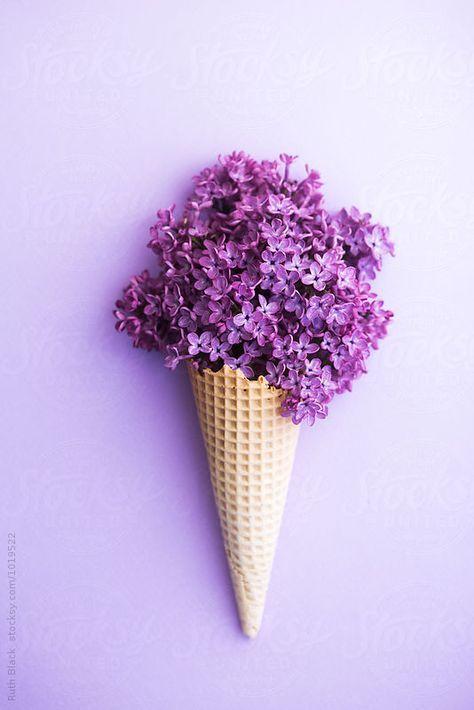 Violett – Purple – Lila