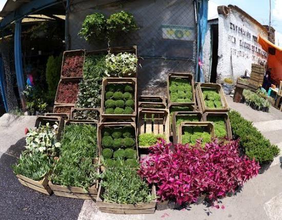 Mercado de Flores - Mexico City