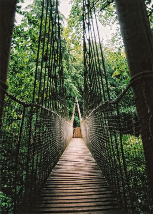 .: Forests, Jungles, Dreams Big, Favorite Places, Suspen Bridges, The Bridges, Crosses, Suspension Bridges, Outdoor Adventure