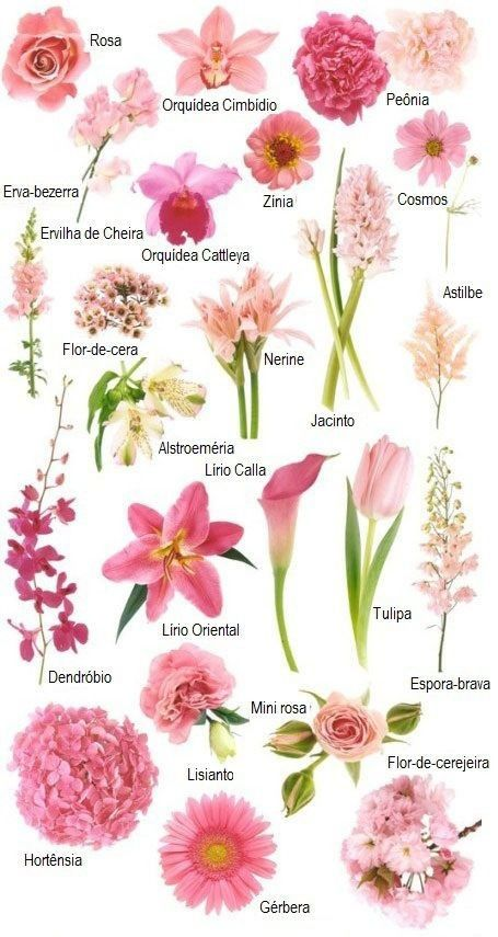Flores na cor rosa - Descubra os nomes de cada flor