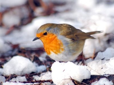 Come preparare le Tortine per gli uccelli:
