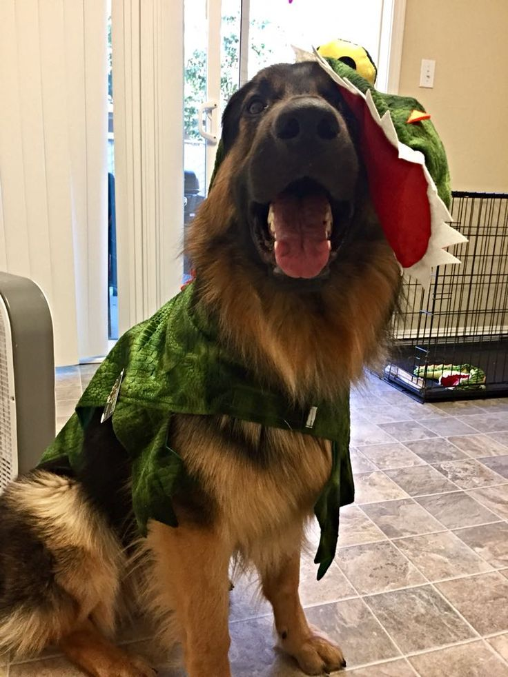 His obsession with alligators means he has to be one for Halloween! http://ift.tt/2dAE9LS