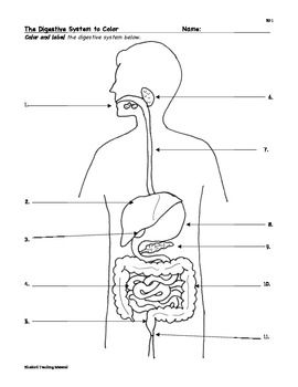 Kid size digestion coloring pages ~ Unit-Digestive System- This worksheet will be a good ...