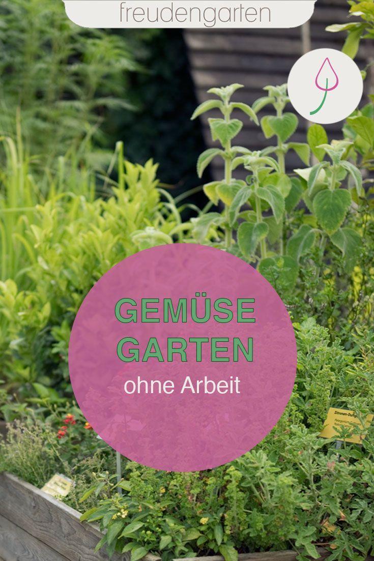 Einen Pflegeleichten Gemusegarten Anlegen So Gelingt S Gemusegarten Gemusegarten Anlegen Garten