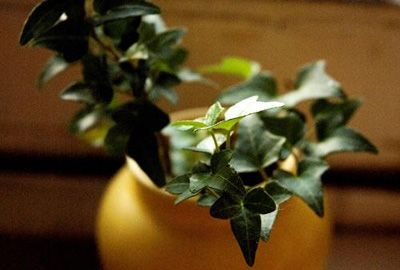 15 houseplants to improve indoor air quality