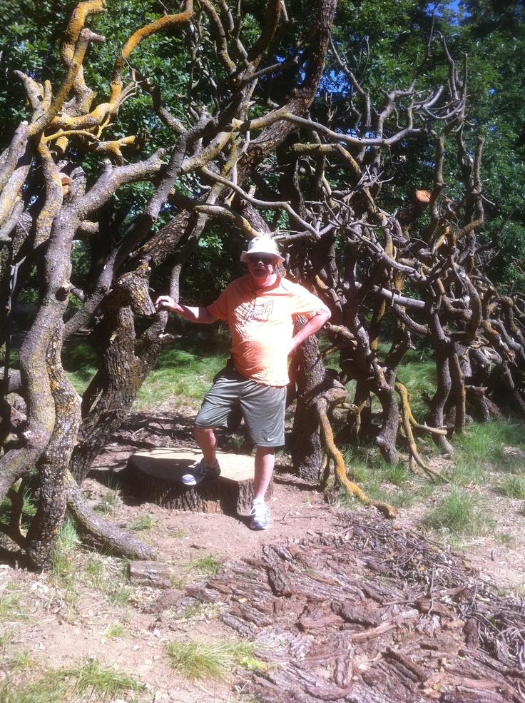 The Oak Tree Sculpture along the UC Davis Arboretum
