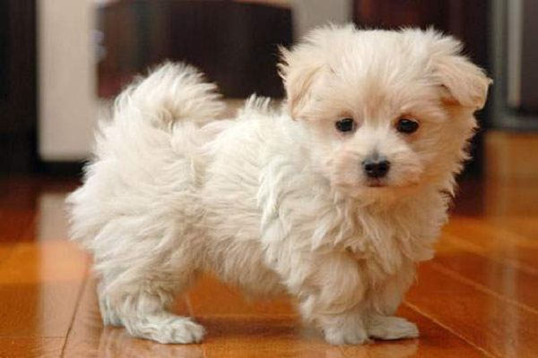 Pin by endar vitria on Cute Baby Animals Pinterest