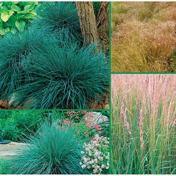 Graceful Grasses Collection