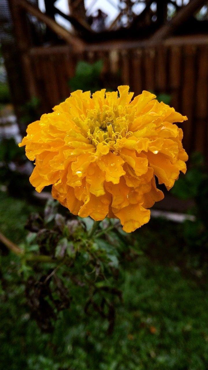 Pin Oleh Naila Rahmah Di Flower