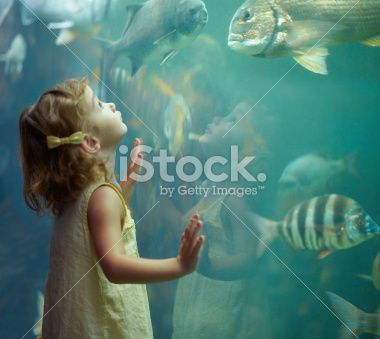 She's focused on those fish Royalty Free Stock Photo