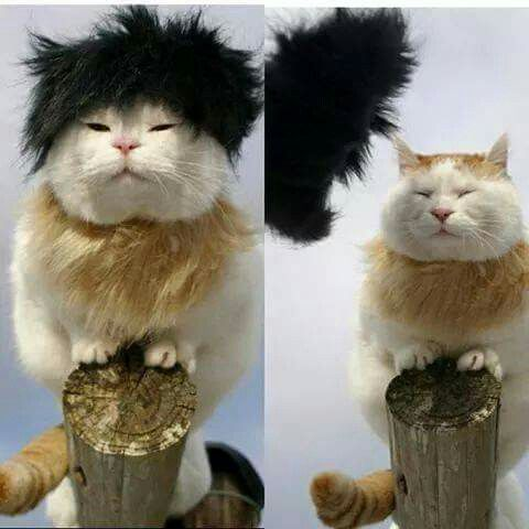 Best Shironeko Images On Pinterest Cats Fat Cats And Kitty Cats - Shironeko cutest happiest bundle fur ever seen