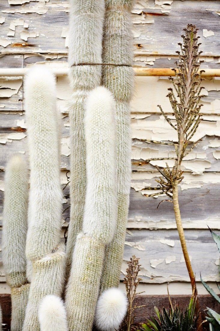 best garden images on pinterest backyard ideas beautiful