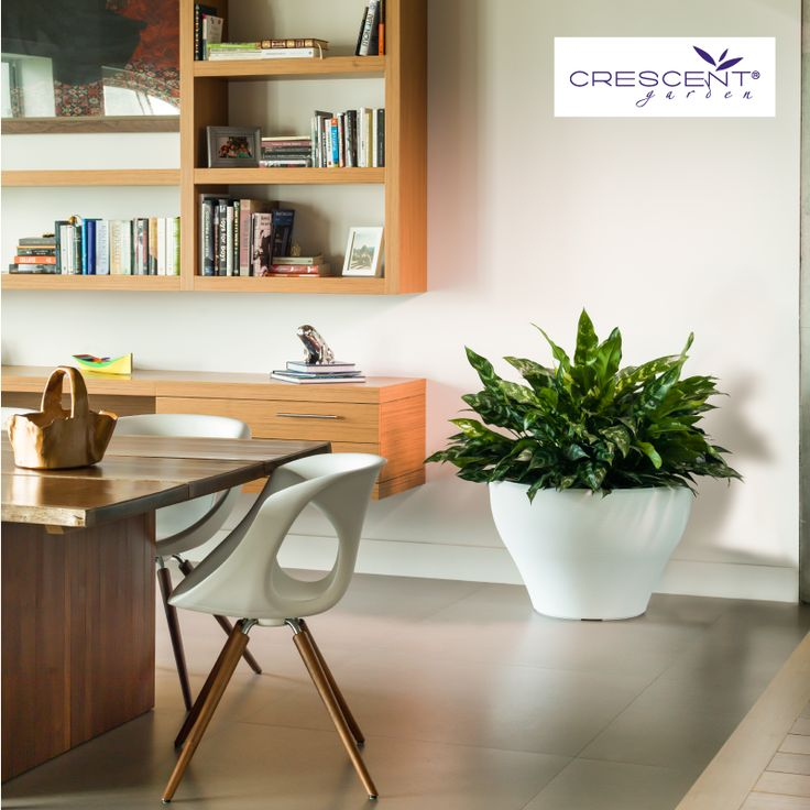Like a designer chair our Juno planters can stand on their own and become a highlight in your design.