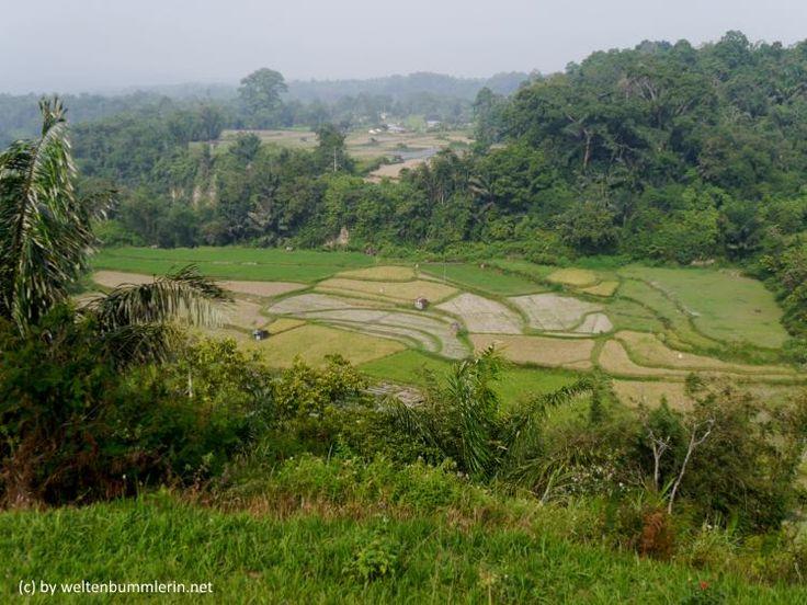 Sumatra wird immer noch völlig unterschätzt, dabei hat es so viel zu bieten und sollte unbedingt auf Deine Buket List
