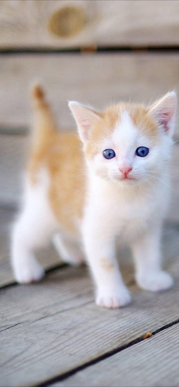 Cute Cats Wallpaper Kittens Cutest Baby Kittens Cutest Cute Cat Wallpaper