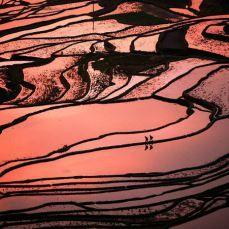 La impresionante belleza de los coloridos campos de cultivo de China.  The stunning beauty of the colorful fields of cultivation of China