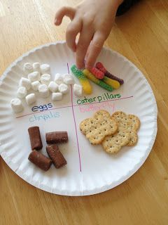 We used marshmallows for the eggs, gummy worms for caterpillars, tootsie rolls for the chrysalis and fancy crackers for the butterfly.