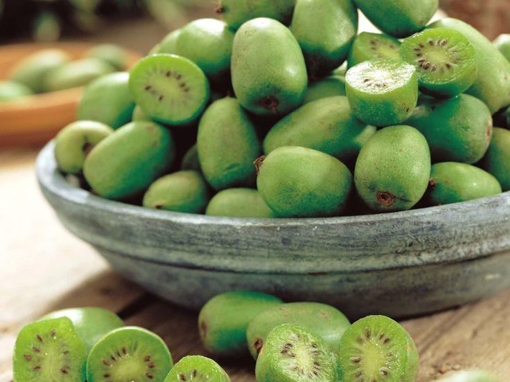 Le Kiwaï, également appelé « Kiwi de Sibérie » (Actinidia arguta) est une plante grimpante originaire d'Extrême-Orient, cultivée pour ses fruits comestibles et savoureux ! En plus de son allure de « mini-kiwi », son fruit se différencie aussi par sa peau non velue qui n'exige aucun épluchage avant consommation et sa chair est encore plus riche en vitamine