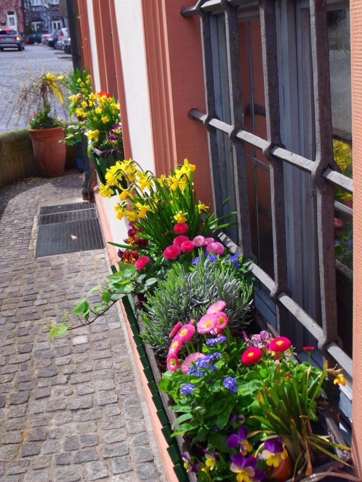 Flower boxes in the windows Easter Morning in Bamberg
