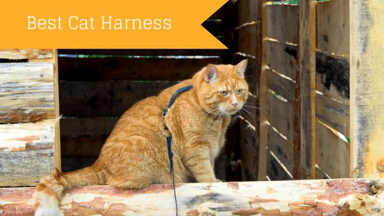 Do you want to walk your cat? a simple collar and leash wont do... A cat harness  will keep your cat safe and protected while you both are taking a walk.   https://catoverdose.com/best-cat-harness/
