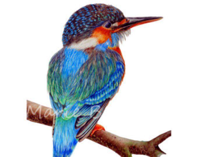 Kingfisher Art Print, Bird Print, Watercolour Print, Bird Painting Watercolor Painting, Home Decor Wall Art, Gifts For Him, Fine Art Prints