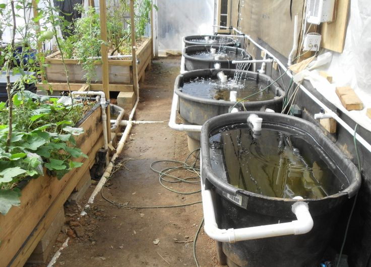 Buy / Sell Marketplace - Aquaponic Gardening