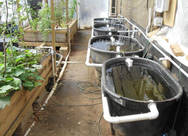 Buy / Sell Marketplace - Aquaponic Gardening