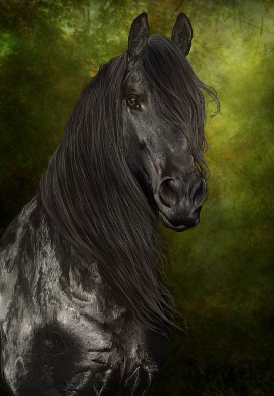 Friesian named Icarus - Painting