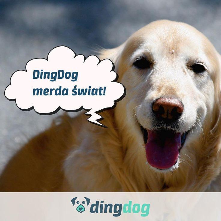 Merdasz razem z nami? #DingDog #aplikacja #pies #dog