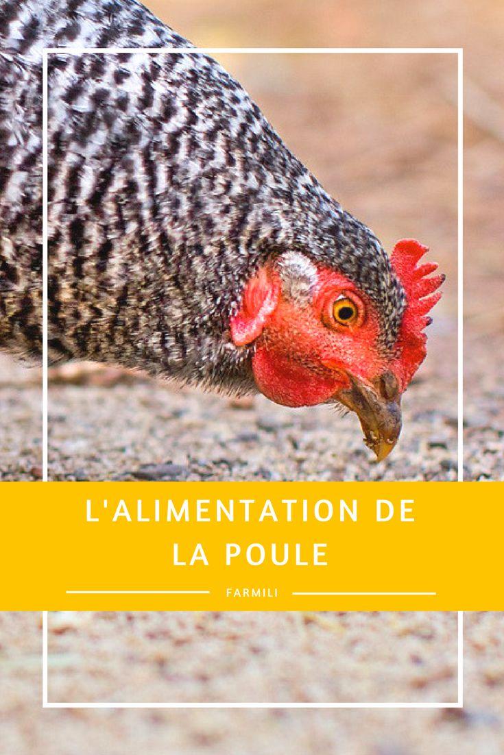 17 best ideas about alimentation poule on pinterest ufs On conservation des oeufs de poule