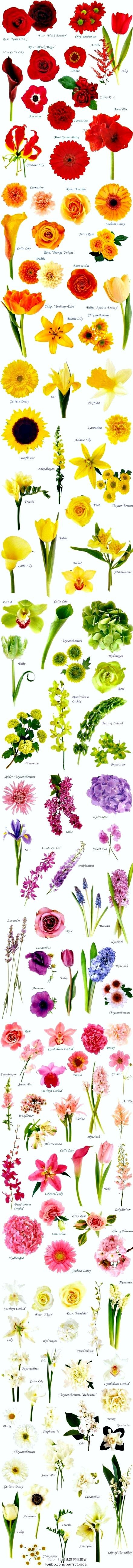 Best flowers for wedding month... #flowerchart #flowertypes
