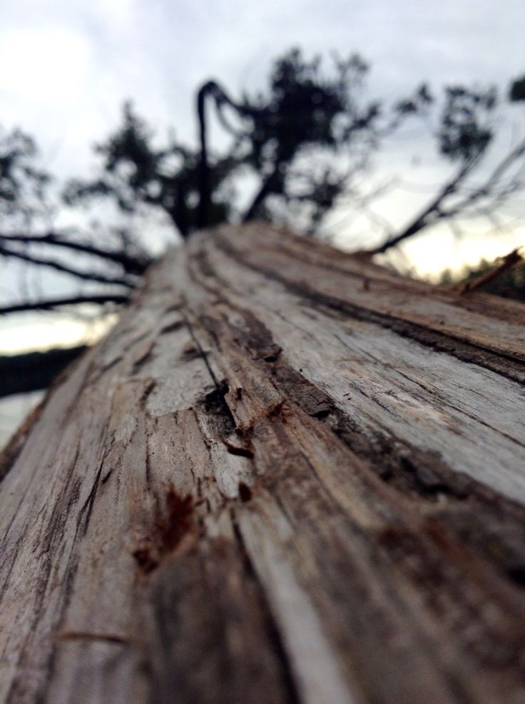Cold focus tree