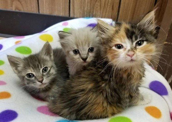 Two Sister Kittens Become Family To Tinier Orphaned Kitten So She Won T Be Alone With Pics Kittens Cats Pretty Cats