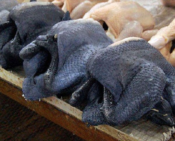 Neu in unserer Serie Underground Animals: Ayam Cemanis sind komplett schwarze Hühner. Und wenn wir komplett sagen, dann meinen wir auch komplett: Schwarze Federn, schwarzer Schnabel, schwarze Organe, schwarzes Fleisch – nur das Blut der indonesischen Züchtung ist rot. Es gibt nur einen einzigen Grund, warum wir die Metal Hühner nicht schon längst in Wacken