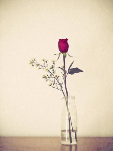 "Saatchi Art Artist Flavio Coelho; Photography, ""Red rose"" #fineart"