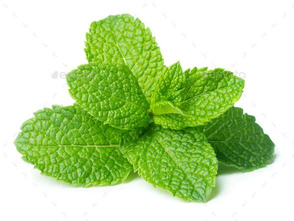 Mint By Valengilda Green Fresh Mint Leaves Isolated On White Background Green Fresh Mint Valengilda Leaf Photography Mint Plants Peppermint Plants