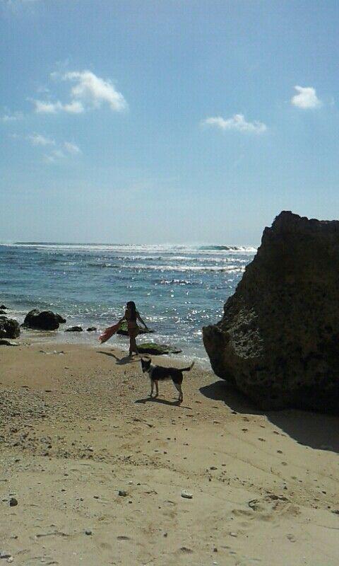 Beach dog love