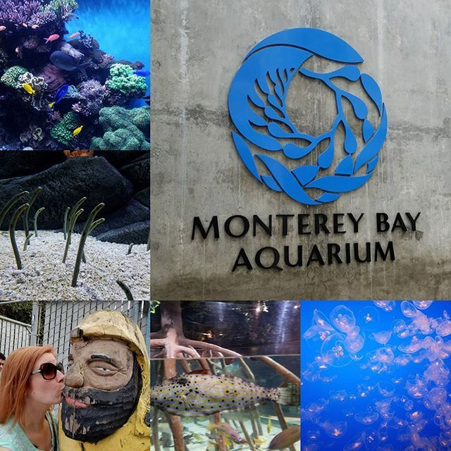 I wish I was a fishy in the sea...I wish I was a fishy in the sea! I'd swim around so cute without a bathing suit!  OOOOOH I wish I was a fishy in the sea!  #montereybayaquarium #montereylocals - posted by Hannah R. Hartsig https://www.instagram.com/hannah.rose.goes - See more of Monterey Bay at http://montereylocals.com