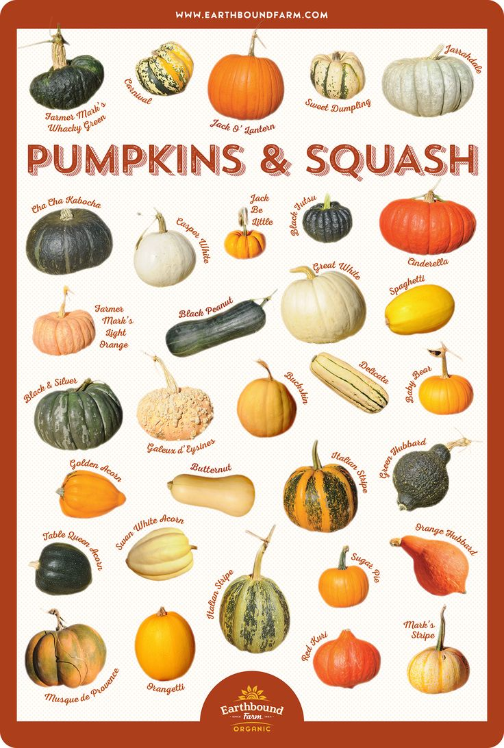 Squash and Pumpkin Identification Chart